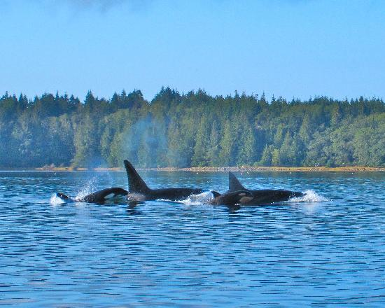 clayoquot be2
